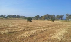 Field for sale - Psalidi Kos