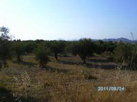Field for sale - Messaria Kos